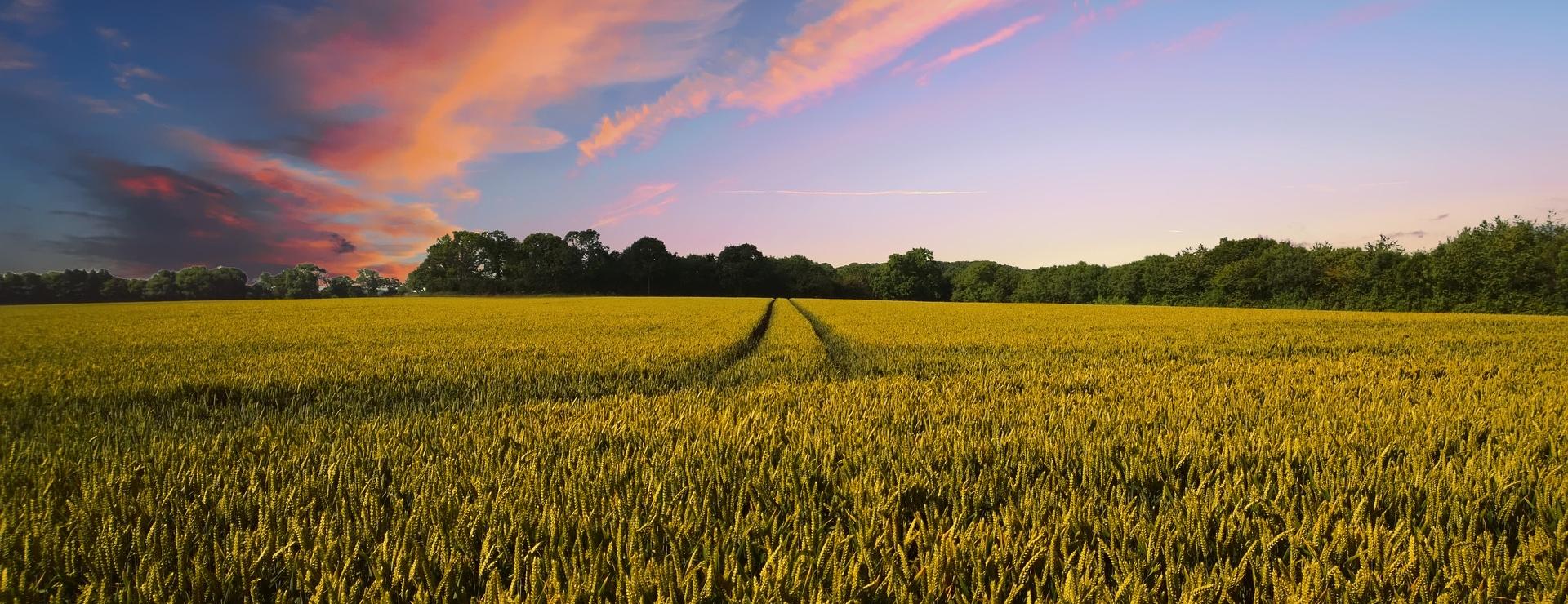 Countryside field trips