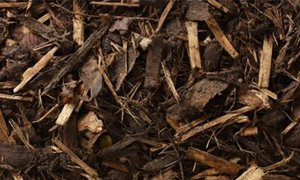 Forest Mulch Loose