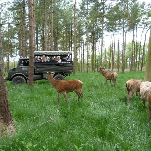 Unimog in Wood with Deer