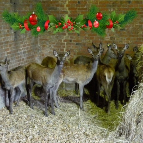 Christmas Deer Calves