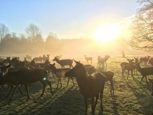 reed deer stourton estates