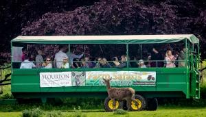 deer safari at Wold Walking Festival 2019